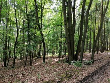 Prodej lesních pozemku